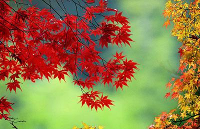 警惕传销新变种_警惕秋季最常出现的6种疾病