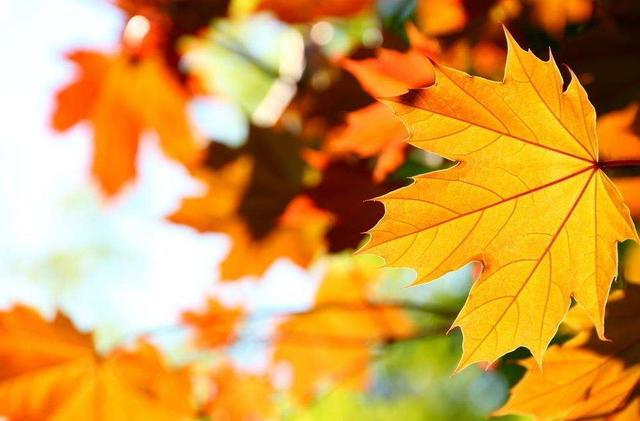 [中寒暑症状]寒暑交替的秋季 如何养生养胃