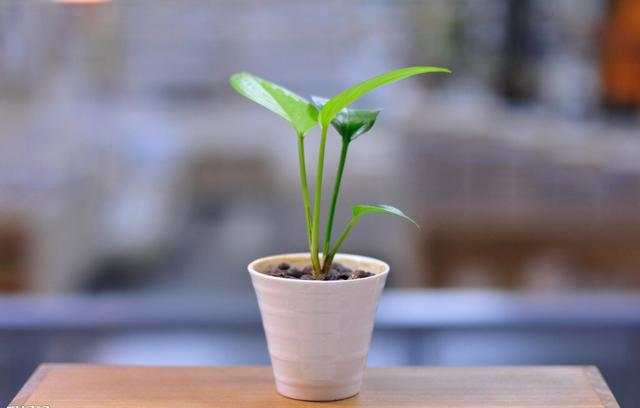 [养什么植物对身体好]什么植物有利于身体健康 什么植物适合在室内种植
