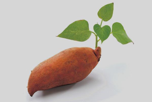 注意!常吃红薯叶可延缓衰老 增强免疫力