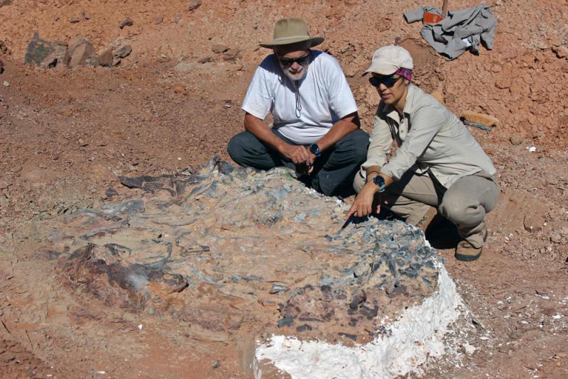 2.2亿年前恐龙墓