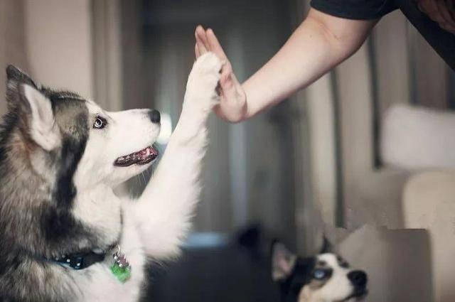 女子将遗产留给两条狗!网友炸锅了!公证处这样回应