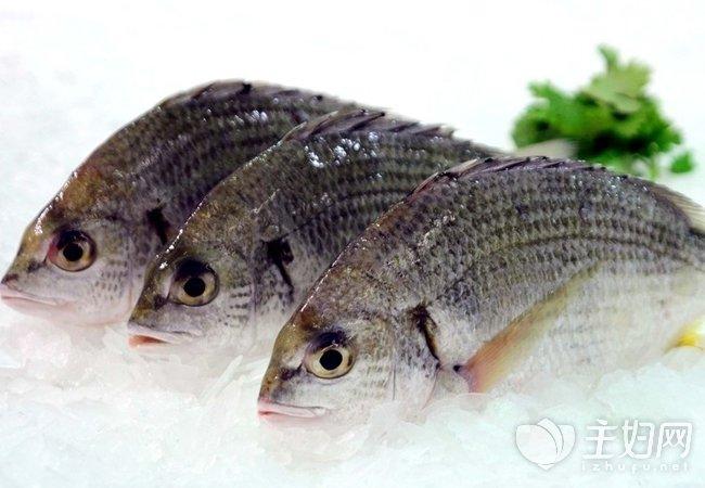鱼类6501.jpg