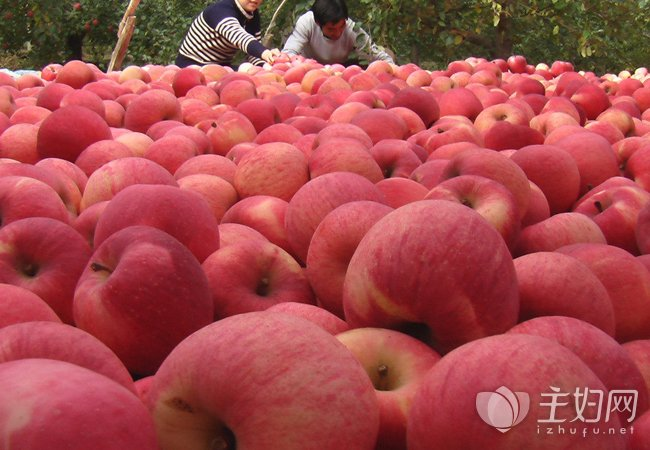 【苹果减肥的正确方法】苹果减肥食谱曝光