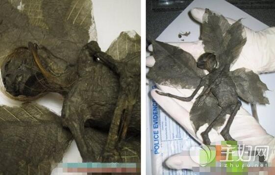 南非发现长翅膀的人形怪物