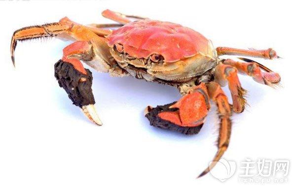 蒸螃蟹需要多长时间