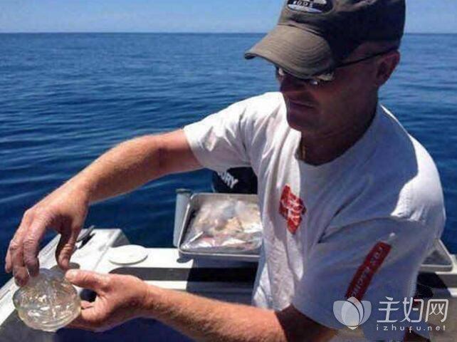 新西兰一男子钓到像果冻的鱼