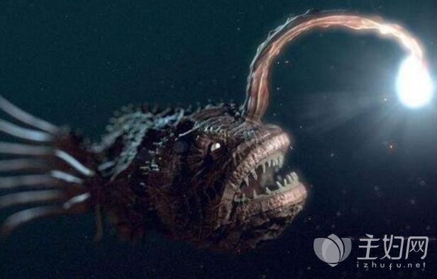 灯笼鱼之琵琶鱼最丑最恶心