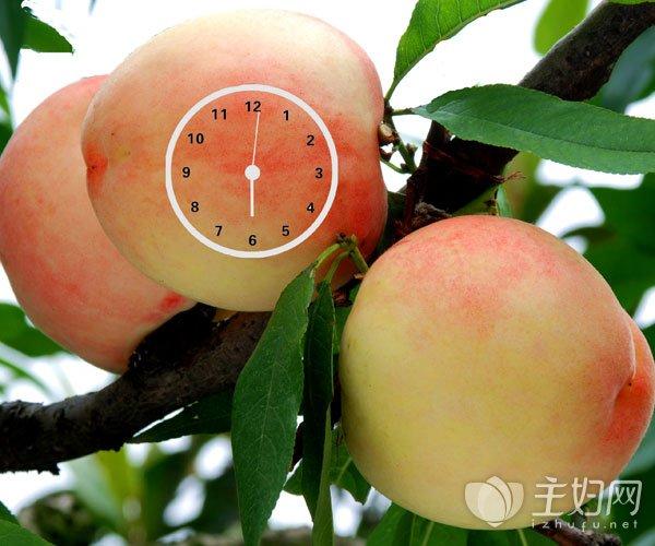 桃子洗后怎么保存