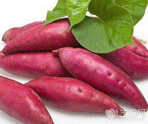 减肥吃红薯的好处