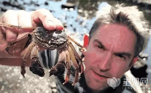 比利时大闸蟹泛滥.jpg