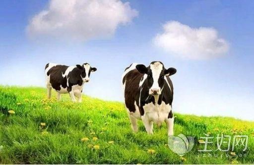 进口奶粉排名前十|奶粉禁用进口奶源!婴幼儿乳粉配方注册制重订